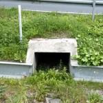 Hier koennen alle moeglichen Kleintiere die Strasse sicher unterqueren