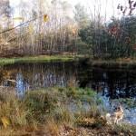 Ein schoener Platz ist dieser Teich am Wegesrand