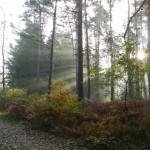 Immer wieder schön: wenn die Morgensonne duch den Wald scheint. Das Bild entstand in der Naehe des Ueberlaufs vom Kraehenmoor am 1. November 2011