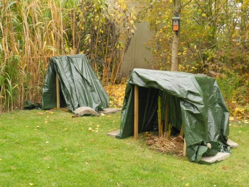 Zelt Für Pflanzen Im Winter : Musa basjoo winterschutz für meine bananen