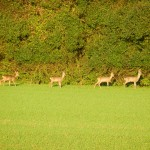 Hier stehen sie vor einer der zahlreichen Hecken. Wie man sieht haben sie zum Teil eine beachtliche Hoehe.