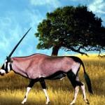 Oryx jagen?