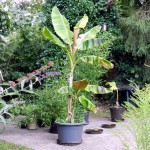 """Oft braucht es offenbar einen gewissen Punkt, den Pflanzen überwunden haben muessen, um dann richtig """"loszuziehen"""""""