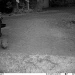 Er bewohnt den Laubhaufen. Dort hat auch schon ein Igel überwintert.