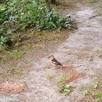Auch dieser huebsche Vogel laesst sich gern mal hier sehen