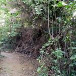 Dieser hohe Reisighaufen ist als Versteck ebenso beliebt wie als Brutplatz