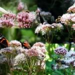 Mit solchen Pflanzen hilft man auch Hummeln, Schwebfliegen und vielen anderen