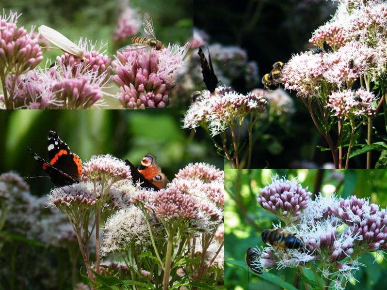 Einheimische wildpflanzen im garten - Einheimische pflanzen im garten ...