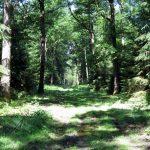 Im Wald in der Nähe des Dorfes Hagen
