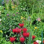 Teil des Gartens im Sommer 2016. Ich mag üppiges Wachstum, wildwüchsigen Gesamteindruck, viele Blüten und ein Miteinander der von selbst erscheinenden Wildpflanzen mit den gepflanzten Arten.