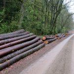 Hier wartet eine Menge Holz auf den Abtransport