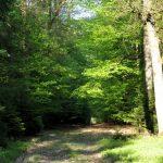 """Dieser Weg heisst bei den Einheimischen """"Liebesbahn"""" - warum auch immer"""